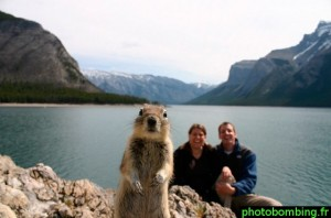 photo bombing ecureuil